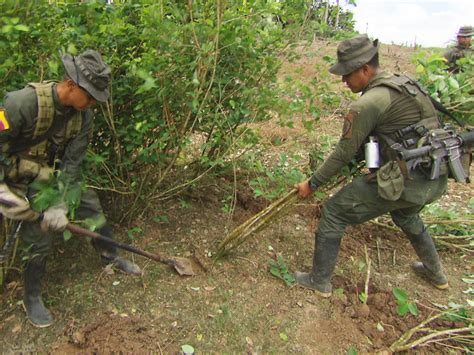 Inside Colombia's efforts to stem cocaine production, one