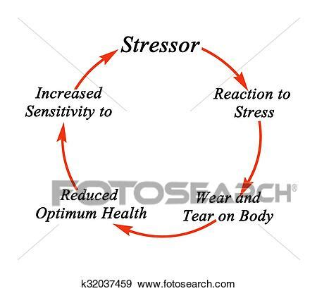 Cycle of stress Stock Photo | k32037459 | Fotosearch