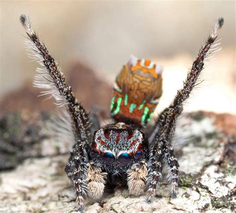 Meet 7 new species of colorful spiders discovered in