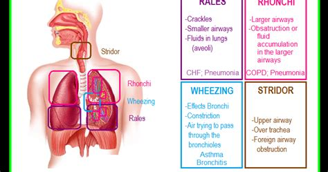 Paramedic Student Central: Lung Sounds Reference Chart