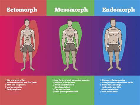 Endomorph Diet Meal Plan and Exercises   Organic Facts