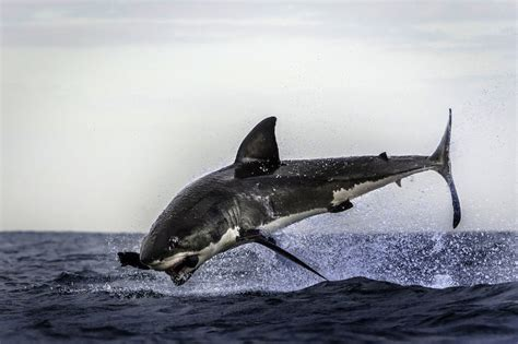 Oh, You Know, It's Just A FLYING SHARK | Geekologie