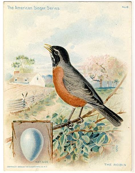 Beautiful Large Bird and Egg Graphic - Robin - The
