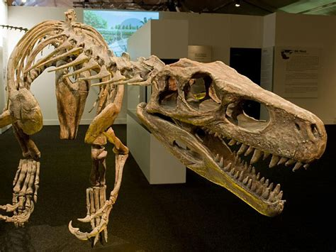 The Rise of Meat-Eating Dinosaurs Is More Complicated Than