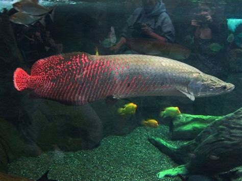 10 Terrifying And Deadly Animals Of The Amazon River